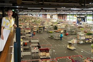 The middle of the FloraHolland flower auction building